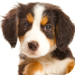 Dog Puppies HD